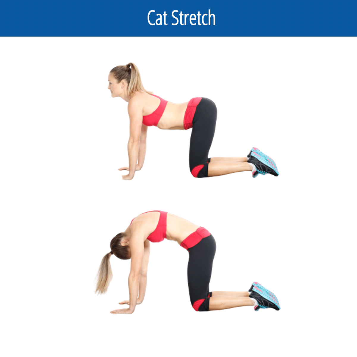 Cat Stretch Image